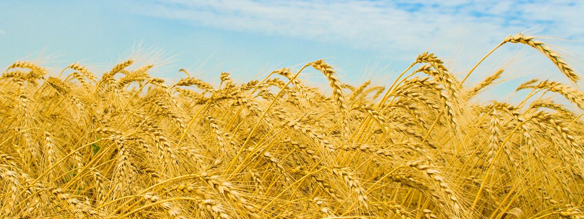 توزیع کننده انواع کودهای شیمیایی، خرید و فروش سموم کشاورزی